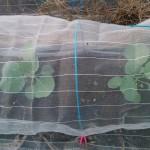 9/4 定植後、10日経過した初秋の様子